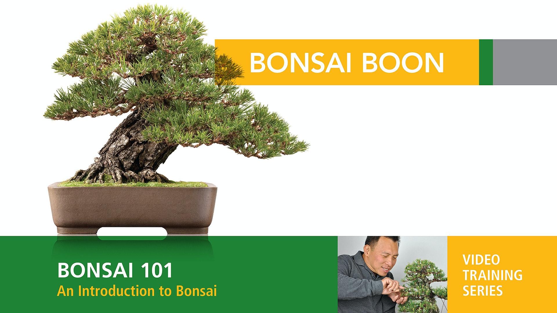 Bonsai 101: An Introduction to Bonsai