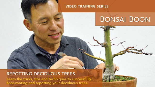 Repotting Decidous Trees