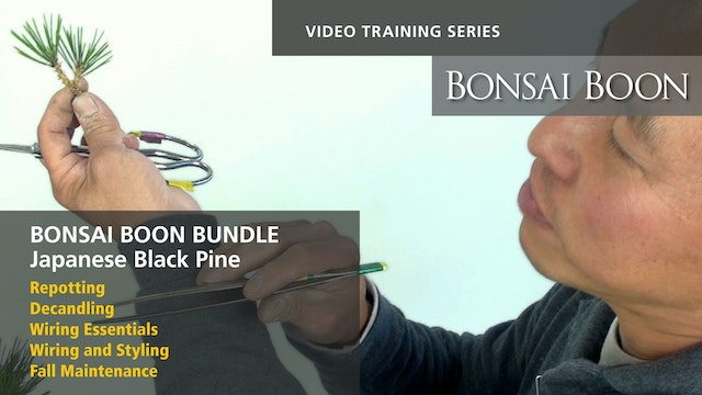 BUNDLE: All five of the Japanese Black Pine Training Videos
