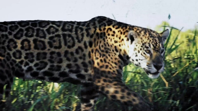 Jaguar - Cápsula 2: A los ojos nos miramos
