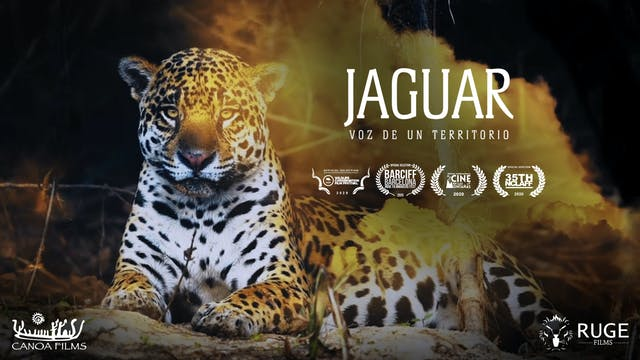 Jaguar Voice of a Territory (English Subtitles) - Feature Film