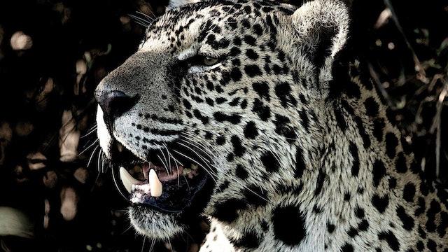 Jaguar - Cápsula 5: Aquel día en el que quiso hablar del miedo