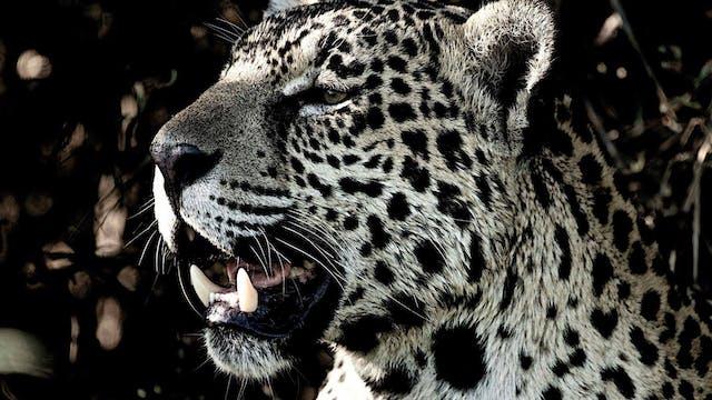 Jaguar - Cápsula 5: Aquel día en el q...