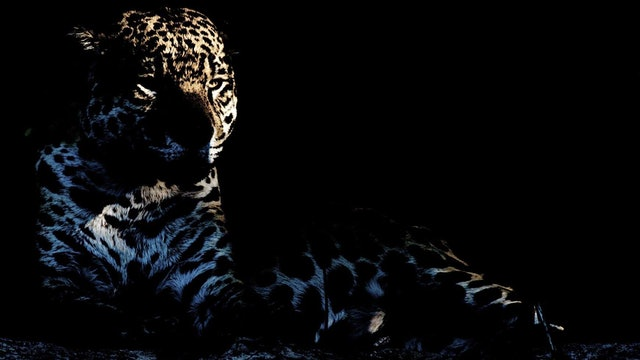 Jaguar - Cápsula 3: Al día siguiente, muy temprano en la mañana