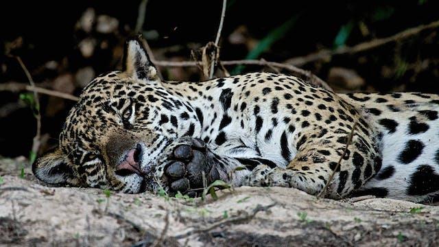 Jaguar - Cápsula 6: Nuestro siguiente...