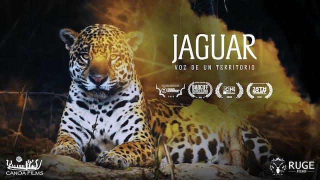 Jaguar Voz de un Territorio - Trailer
