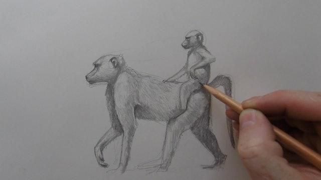 Monkey Sketch II