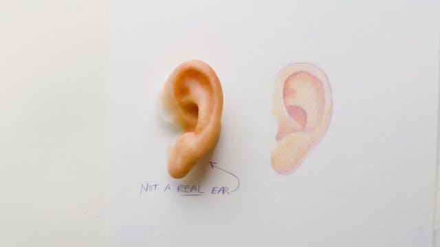 Life-like ear sketch