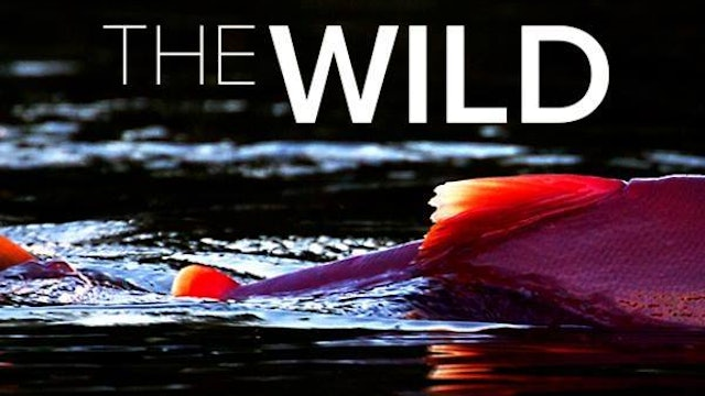 The Wild - Exclusive Trailer