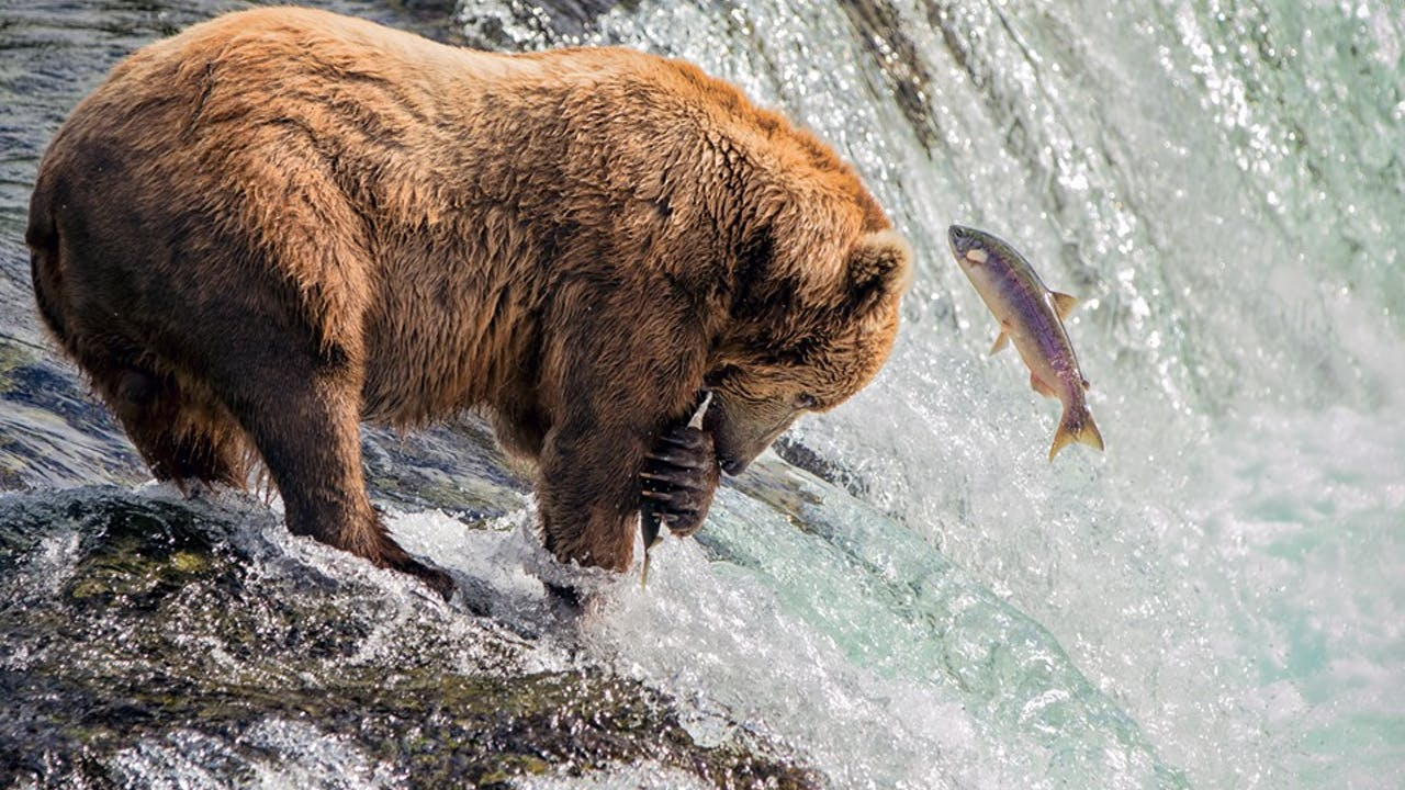 Salmon Hero