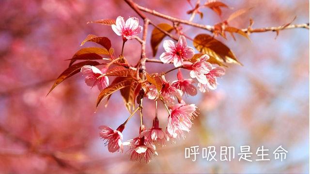 呼吸即是生命 (Chinese)