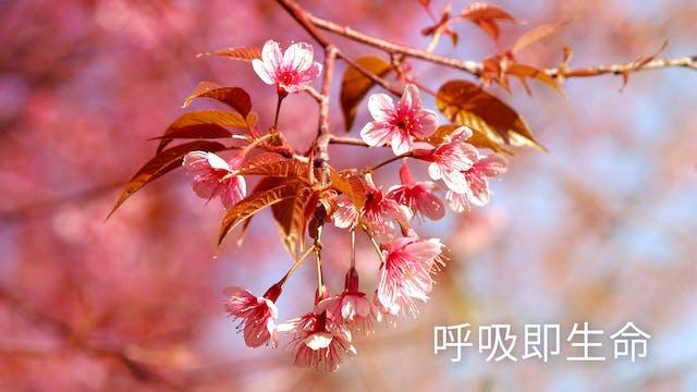 呼吸即生命 (Chinese)