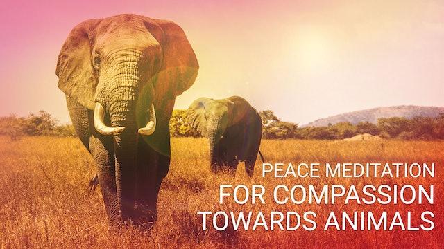 Day 7: Ekam World Peace Festival (Sep 18, 2019 | 20 Minute Abridged)