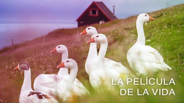 La película de la Vida (Spanish)