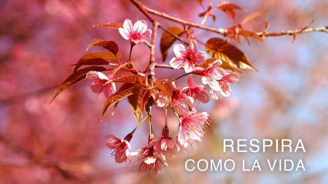 Respira como la Vida (Spanish)