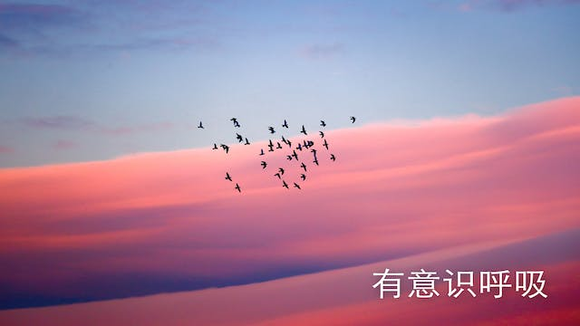 Conscious Breathing (Chinese)