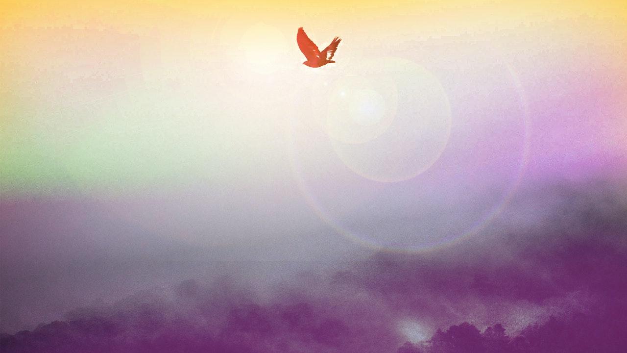 Free Meditation (무료 명상)