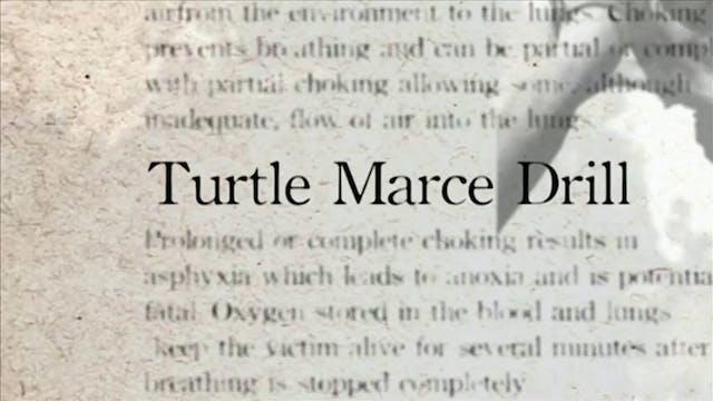 32 Turtle Marce Drill Darcepedia Engl...