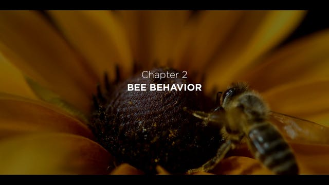 Chapter 2: Bee Behavior