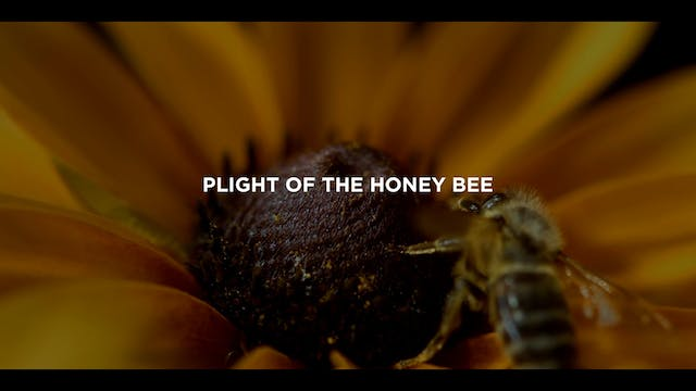 Extras: Plight of the Honey Bee