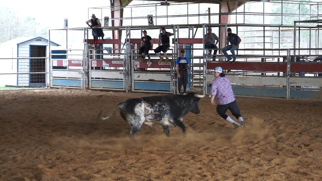 Bull 3 (2)