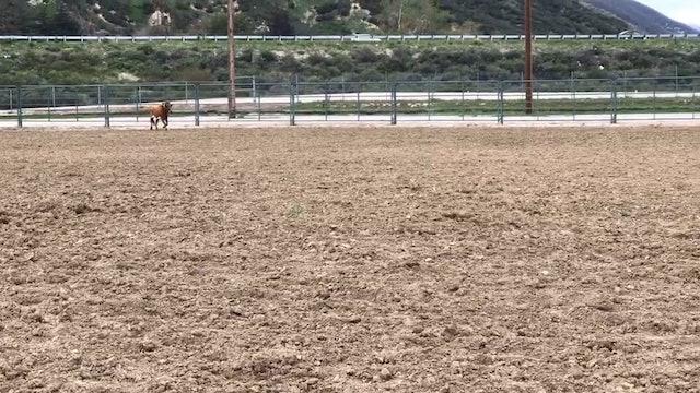 San Bernardino D Camp 2018 - Centipede Game