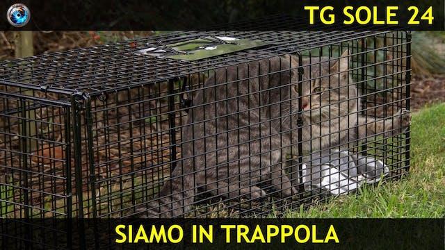 TgSole24 21.10.20 | Siamo in trappola