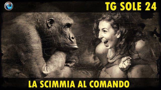 TgSole24 14.10.20 | La scimmia al com...