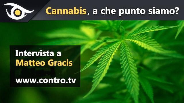 Cannabis, a che punto siamo?