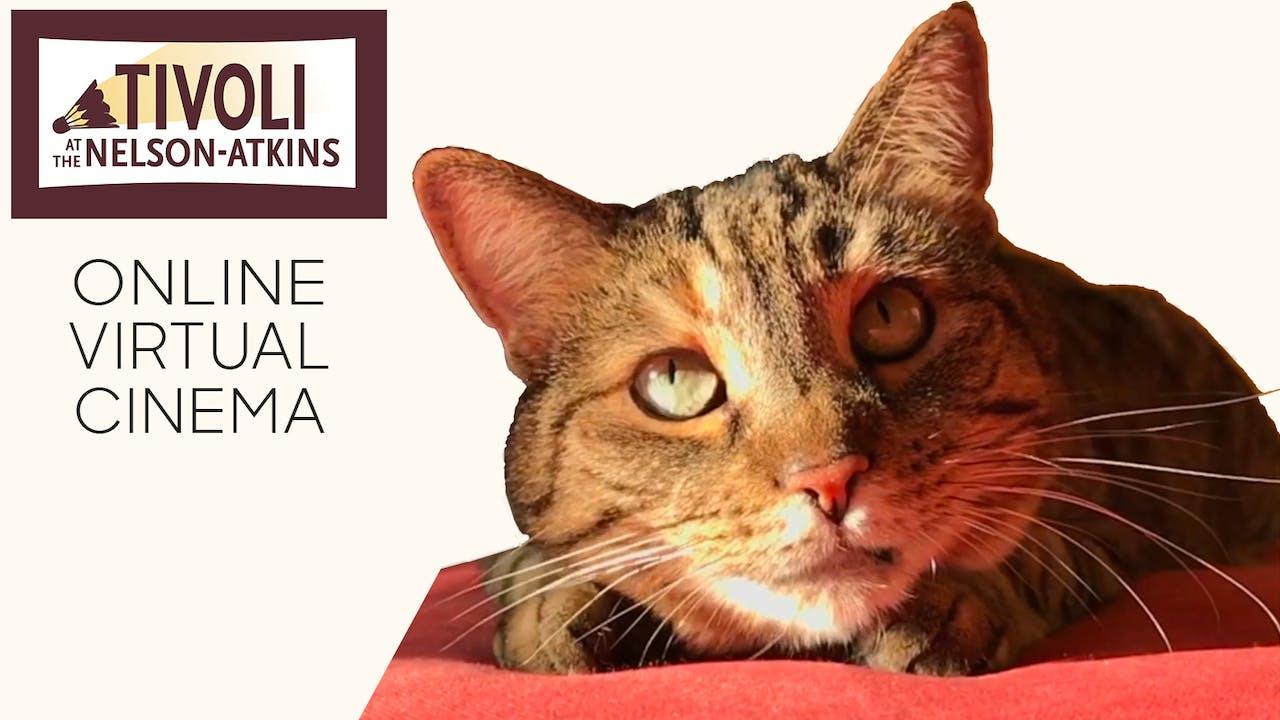 Quarantine Cat Film Fest @ Tivoli - Nelson Atkins