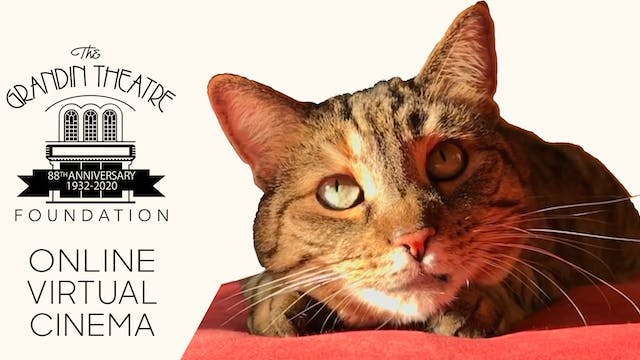 Quarantine Cat Film Festival @ Grandin Theatre