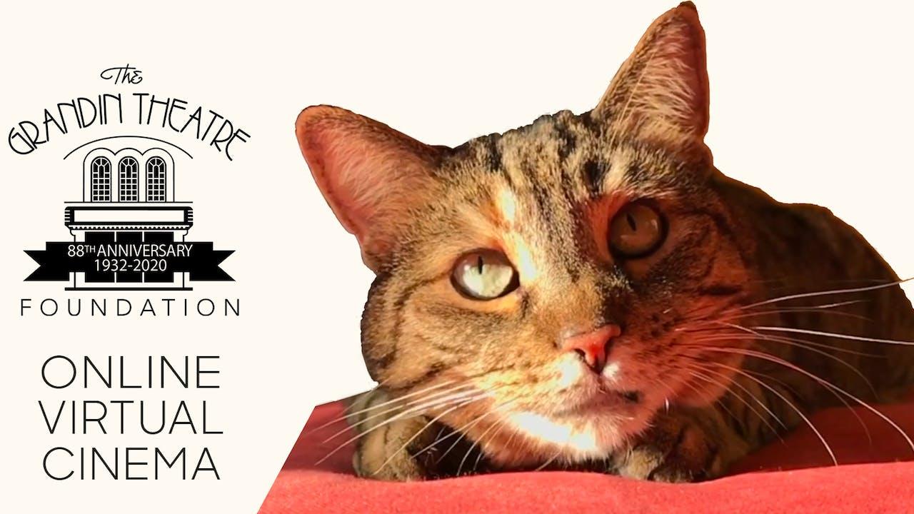 Quarantine Cat Film Festival @ Grandin Theatre