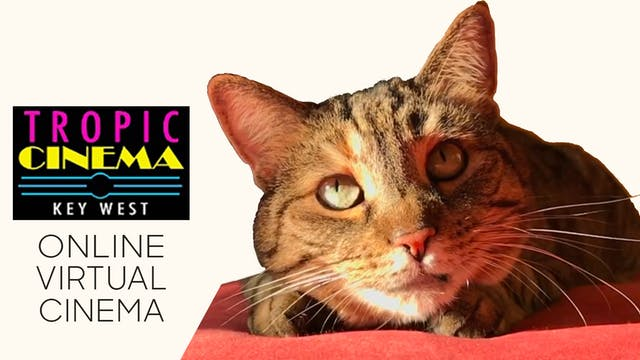 Quarantine Cat Film Festival @ Tropic Cinema