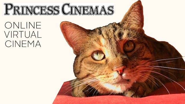 Quarantine Cat Film Festival @ Princess Cinemas