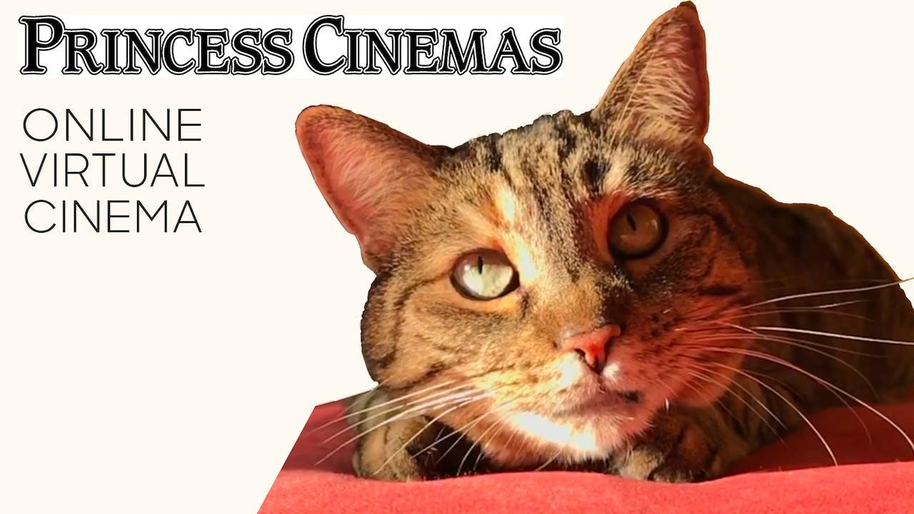 Quarantine Cat Film Festival @ Princess Cinemas