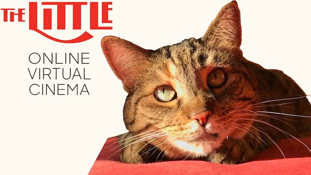 Quarantine Cat Film Festival @ The Little Theatre
