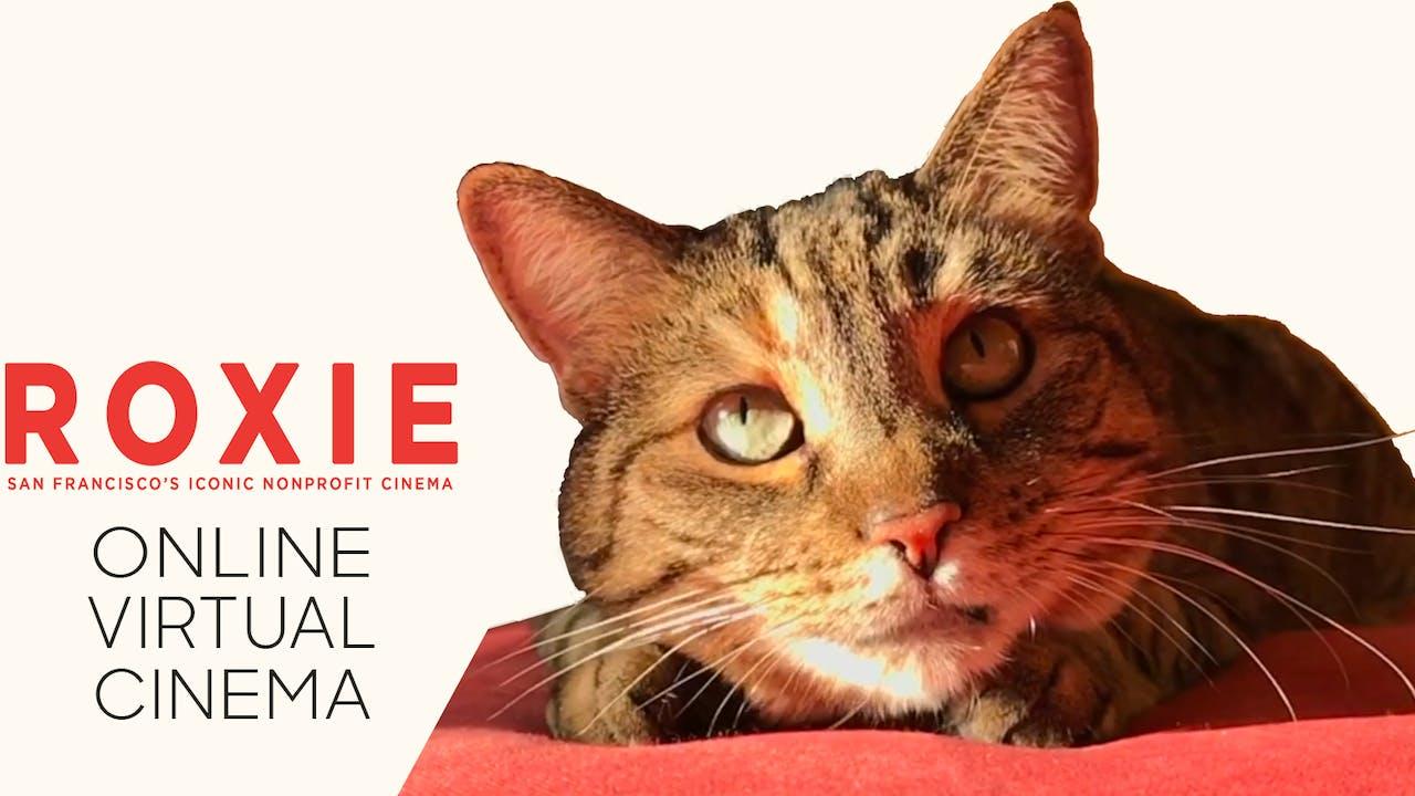 Quarantine Cat Film Festival @ Roxie Theater