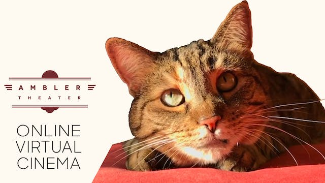 Quarantine Cat Film Festival @ Ambler Theater