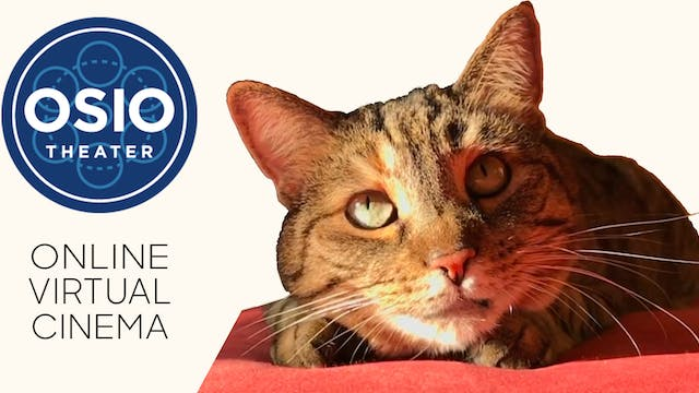 Quarantine Cat Film Festival @ Osio Theater