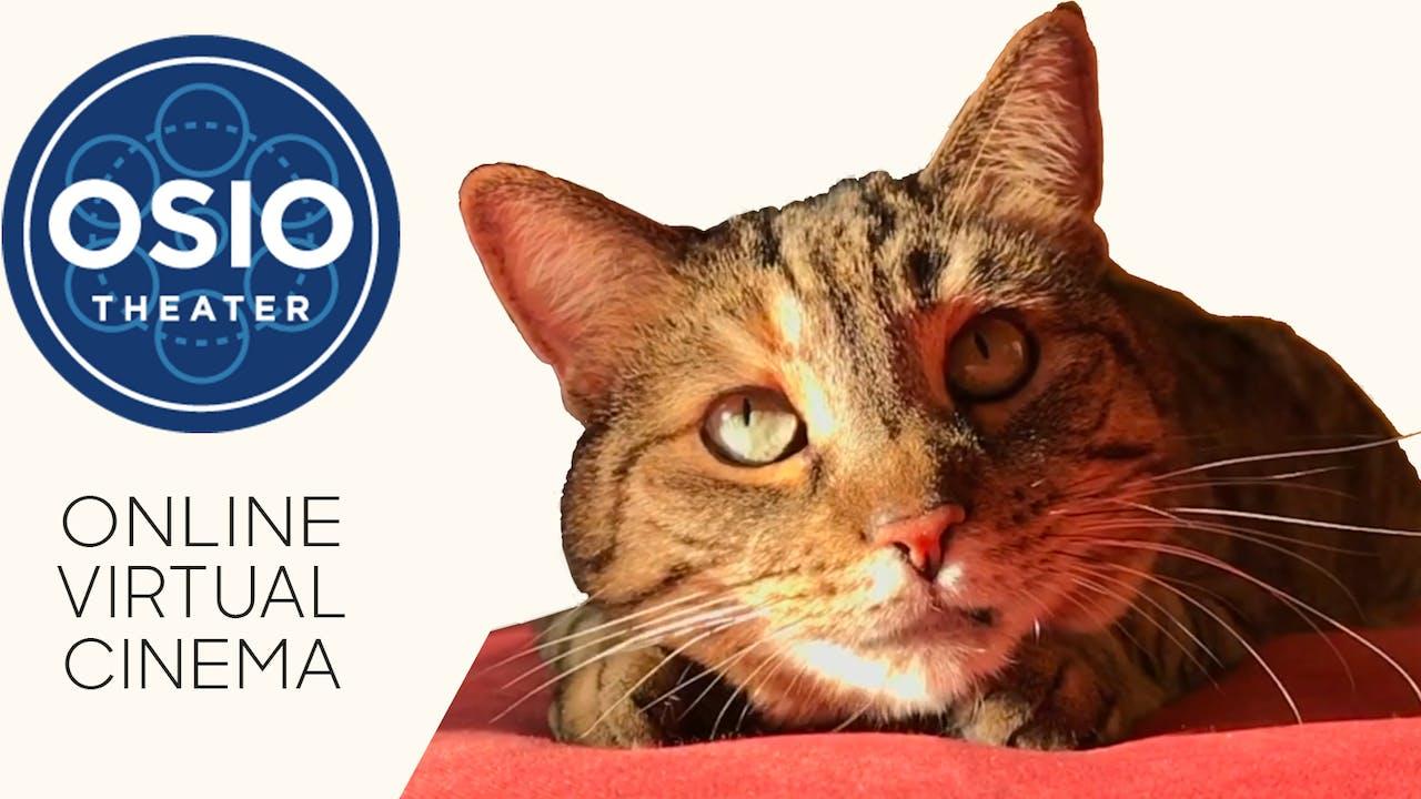 Quarantine Cat Film Festival @ Osio Theater