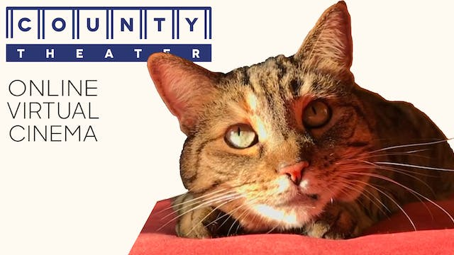 Quarantine Cat Film Festival @ County Theater