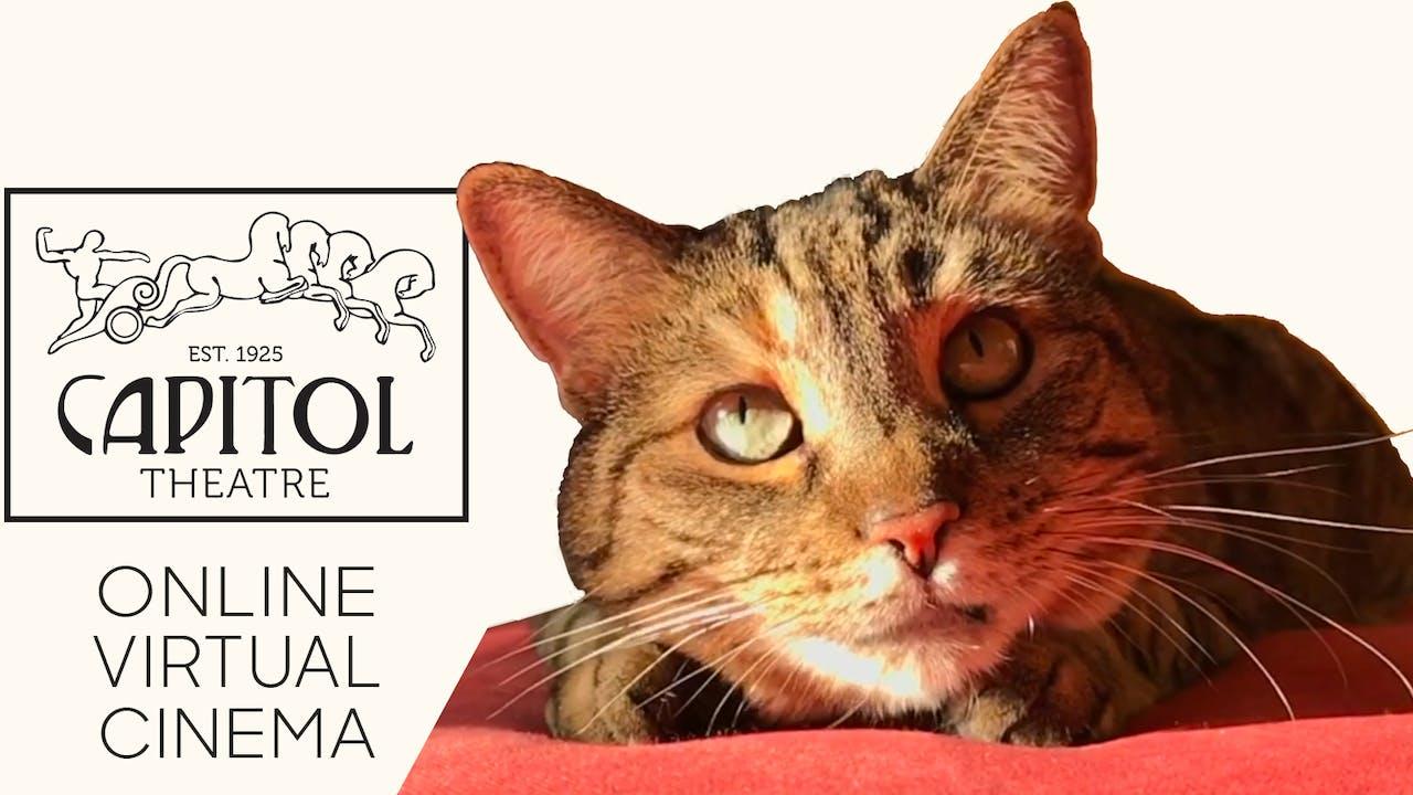 Quarantine Cat Film Festival @ Capitol Theatre