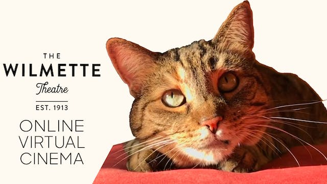 Quarantine Cat Film Fest @ The Wilmette Theatre