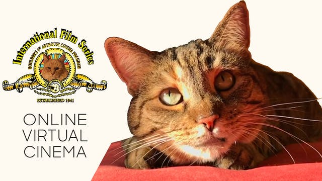 Quarantine Cat Film Festival @ IFS
