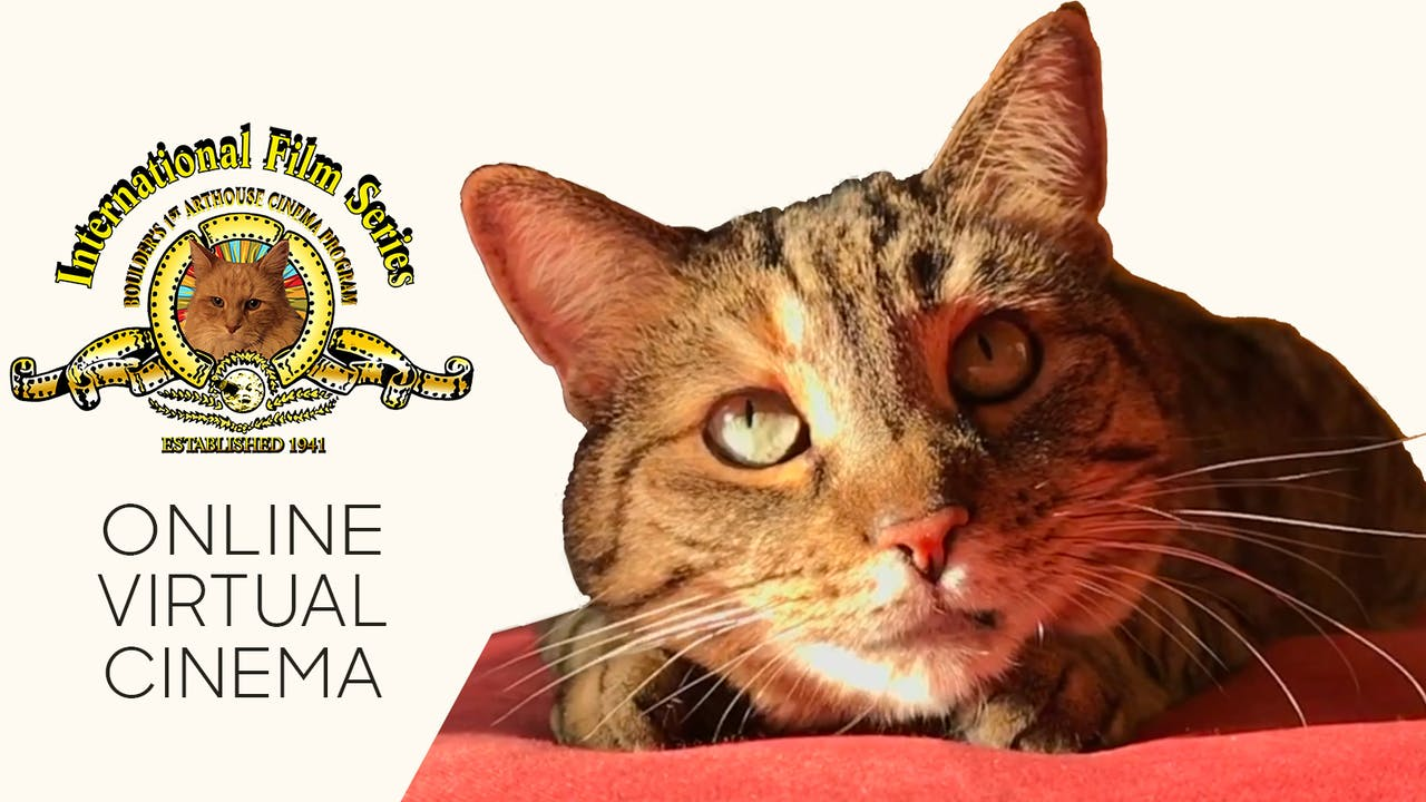 Quarantine Cat Film Festival @ IFS