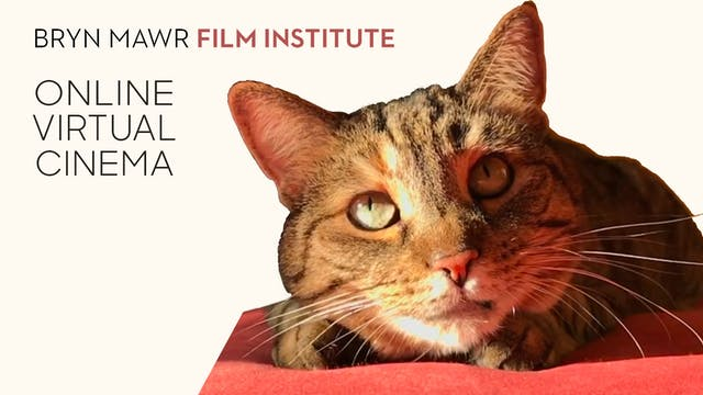 Quarantine Cat Film Festival @ Bryn Mawr Film