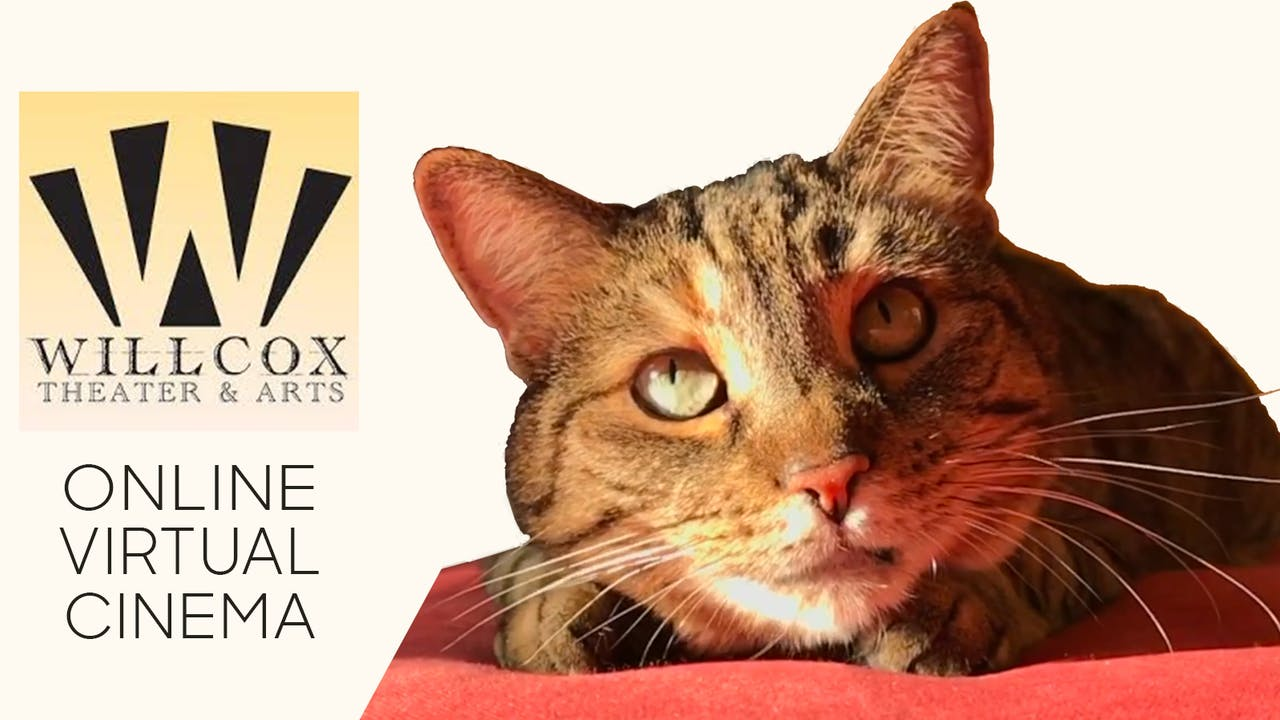 Quarantine Cat Film Festival @ Willcox Theater