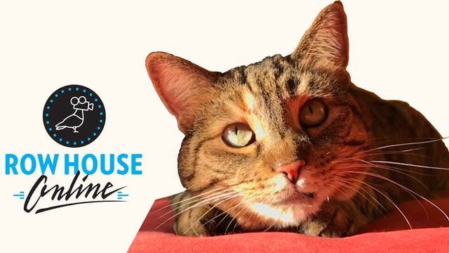 Quarantine Cat Film Festival - British Audiences