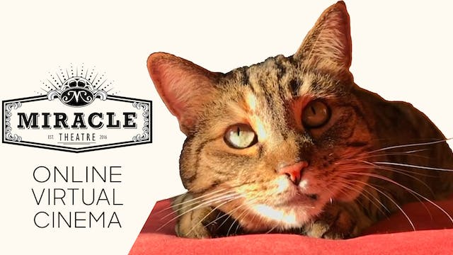 Quarantine Cat Film Festival @ Miracle Theatre