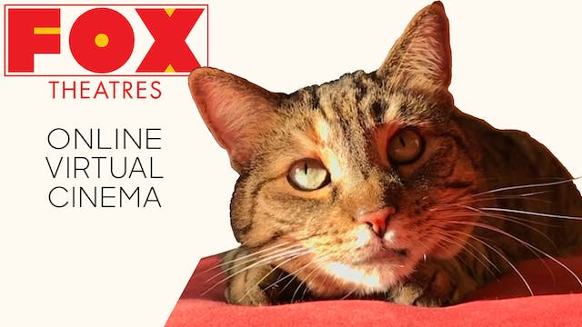 Quarantine Cat Film Festival @ Fox Theatres